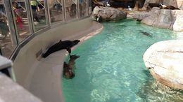 You can buy food and feed it to the Sea Lions, they are noisy., Josh - February 2015
