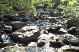 Photo of Goa 2-Day Private Tour from Goa: Jungle Adventure in Mollem National Park Including Dudhsagar Falls and Jeep Safari Mollem National park