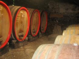 Photo of Florence Chianti Region Wine Tasting Half-Day Trip from Florence The Cellar