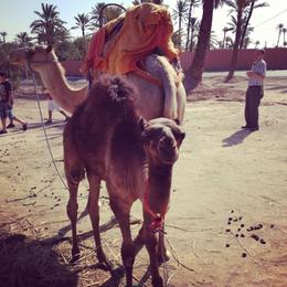 I didn't take a camel ride, but others did. (photo by me) , silver_sparrow - August 2013
