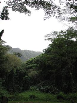 Manoa - Rainforest - December 2007