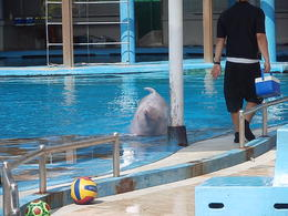 Photo of Singapore Singapore Sentosa Island Afternoon Trip Pink Dolphin at the Dolphin Lagoon