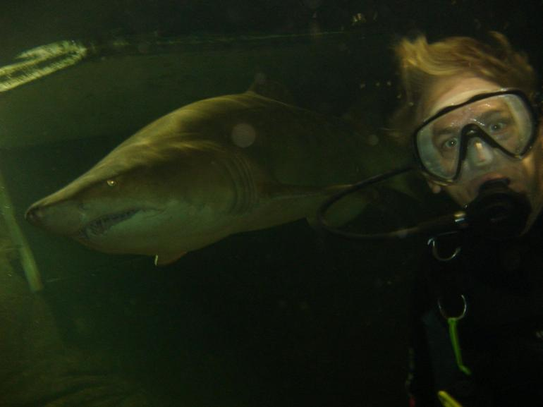 Shark with Diver - Sydney