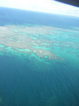 Photo of Cairns & the Tropical North Great Barrier Reef Scenic Helicopter Tour and Cruise from Cairns We saw a shark!