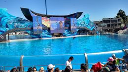The whale show is amazing, Josh - February 2015