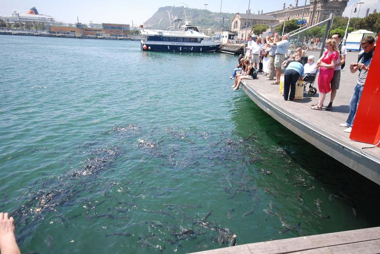 Port Vell and La Barceloneta Fish Frenzy - Barcelona