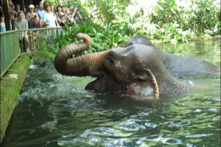 Singapore Morning Zoo Tour - Singapore
