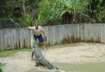 Photo of Cairns & the Tropical North Hartley's Crocodile Adventure Half-Day Tour