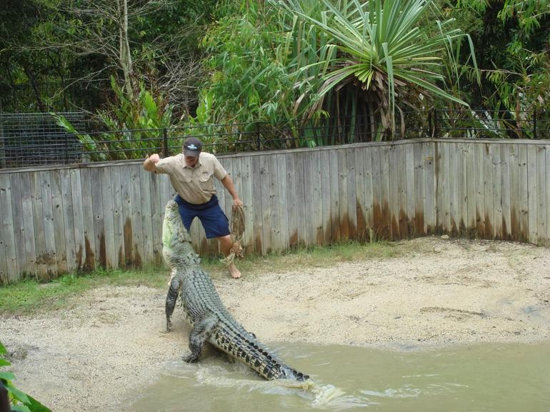 Crocodile attack show - Palm Cove
