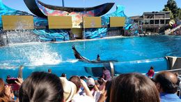 Whales can do front flips and back flips, Josh - February 2015