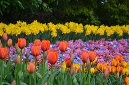 Beautiful displays of flowers at Keukenhof Gardens - if you love flowers in any way, this is a must see! , Kiana C - May 2016