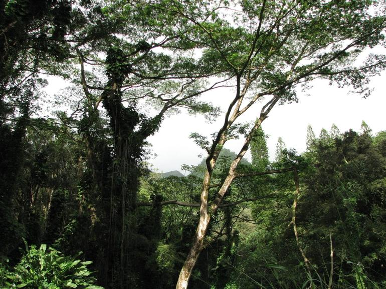 Manoa - Rainforest - Oahu