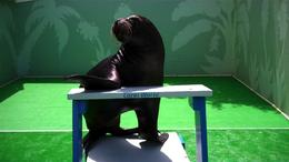 Photo of St Thomas Sea Lion Encounter at Coral World Ocean Park Sea Lion Encounter