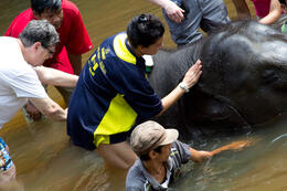 Bathing a baby elephant in the river. , Dale M - October 2013