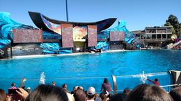 The whales can surf across platforms with their bodies, its amazing!, Josh - February 2015