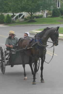 Photo of New York City Philadelphia and Amish Country Day Trip from New York In Amish Country