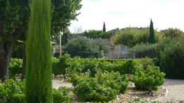 The grounds of Ogier wine in Chateaunef-du-Papes , Sara B - August 2014