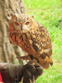 owl , fionatully - October 2015