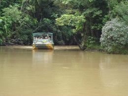 The duck goes through the rainforest and then into the water., Gabrielle H - March 2008