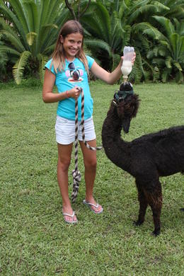 Photo of Miami Jungle Island Miami Crazy for Camelids