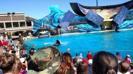 The whale show was my favorite part, Josh - February 2015