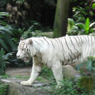 Photo of Singapore Singapore Zoo Morning Tour with optional Jungle Breakfast amongst Orangutans Singapore Morning Zoo Tour