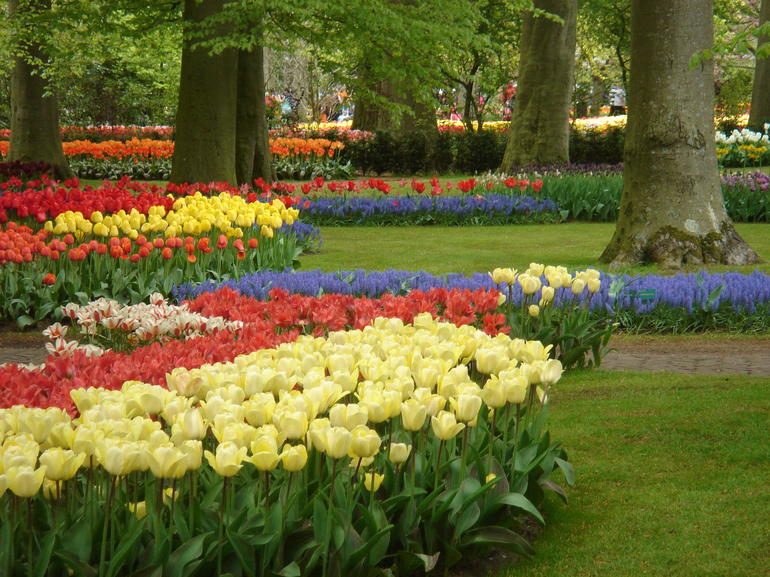 Keukenhoff Gardens during Tulip Time - Amsterdam