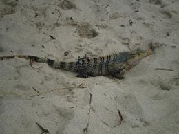 Photo of San Jose Manuel Antonio National Park Day Trip from San Jose Local Lizard