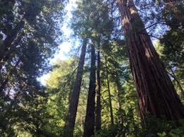Photo of San Francisco Muir Woods and Sausalito Tour plus Bay Cruise Muir Woods