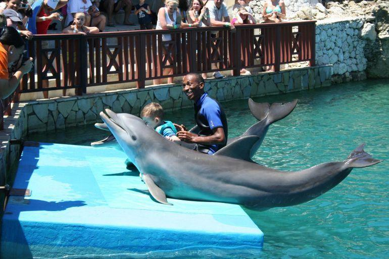 Ocean World Dolphin show - applause!!