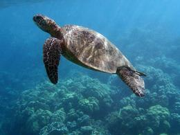 Photo of Maui Kayak and Snorkel - Waterfall Hike and Paddle Tour It's turtle time