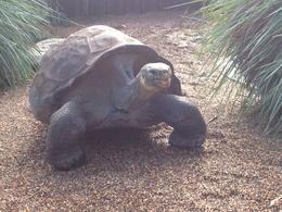 Photo of Sydney Hunter Valley Wineries and Wilderness Small-Group Tour Large Tortoise