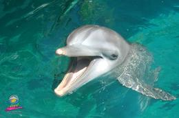 Photo of Puerto Plata Dolphin Encounter at Ocean World The Star of the Show!