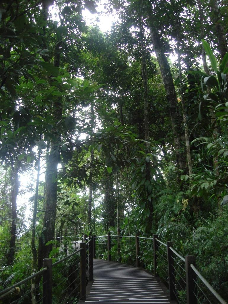 Rainforest - Cairns & the Tropical North