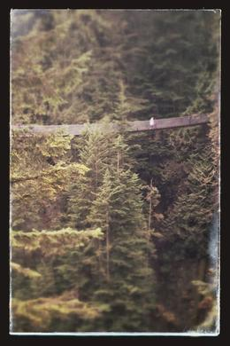 This is a shot from the tree top walk looking back on the bridge , cathryn s - December 2013