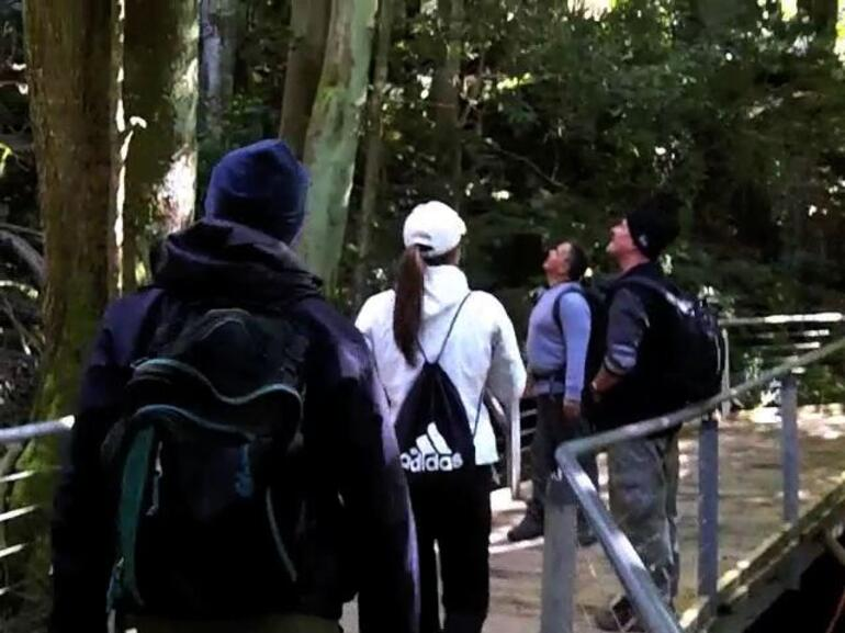 Checkin out the trees - Sydney