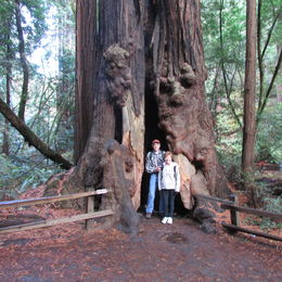 Me and hubby by one of the beautiful giant redwoods , Debbi B - December 2015