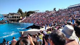 Photo of San Diego SeaWorld® San Diego IMG_20150215_121424845.jpg