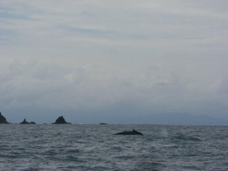 Whale Watching on the Way to Isla Tortuga - Jaco