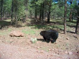 Photo of Grand Canyon National Park Bearizona Drive-Thru Wildlife Park Afternoon walk