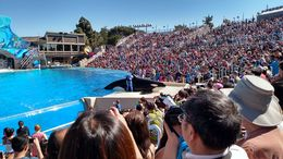 There is one platform in front of everyone where the whale dances and does tricks. Its amazing, Josh - February 2015