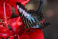 Photo of Penang Penang Butterfly Farm Half-Day Tour