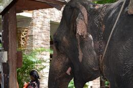 Photo of Bangkok Khao Yai National Park and Elephant Ride Day Trip from Bangkok Pompam