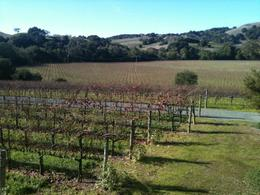 Photo of Napa & Sonoma Customizable Wine Country Tour from San Francisco Michael Mondavi vineyard