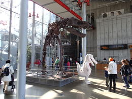 Photo of San Francisco Skip the Line: California Academy of Sciences General Admission Ticket The entrance complete with dinosaur skeleton