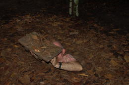 Photo of Ho Chi Minh City Cu Chi Tunnels Small Group Adventure Tour from Ho Chi Minh City A tight fit!
