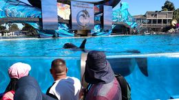 Photo of San Diego SeaWorld® San Diego IMG_20150215_122610247.jpg