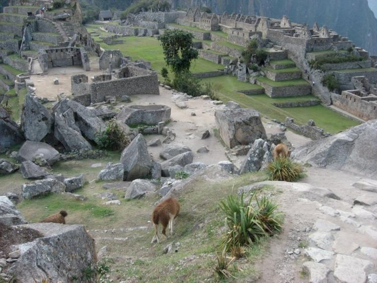 Llamas and Ruins - Cusco