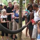 Photo of Kuala Lumpur Private Tour: Elephant Orphanage Sanctuary Day Tour from Kuala Lumpur Monte and Betty