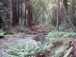 Beautiful day at Muir Woods , Rockerguy - November 2011